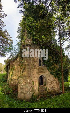 St Cohan Church in Merther, Cornwall, long abandoned and being reclaimed by nature - Stock Image