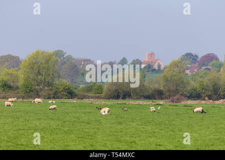 Ashford, Kent, UK. 21st Apr, 2019. UK Weather: Hot and sunny morning in rural Hamstreet near Ashford in Kent as a group of walkers take their dogs for a walk along the embankment of the Royal Military Canal, with rape seed field in full bloom in the background, temperatures of 25°C are expected in some parts of the country on a glorious Easter Sunday. © Paul Lawrenson 2019, Photo Credit: Paul Lawrenson/ Alamy Live News - Stock Image