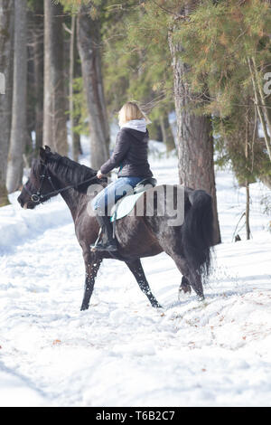 A winter forest. A young blonde woman riding a horse - Stock Image