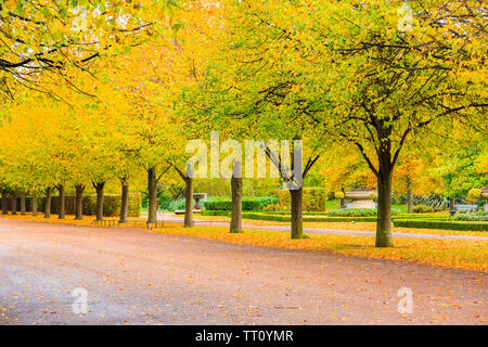 Peaceful scenery of tree lined avenue with benches in the Regent's Park of London - Stock Image