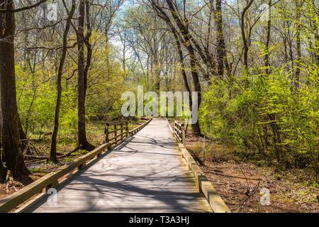 Walkway in Spring - Stock Image
