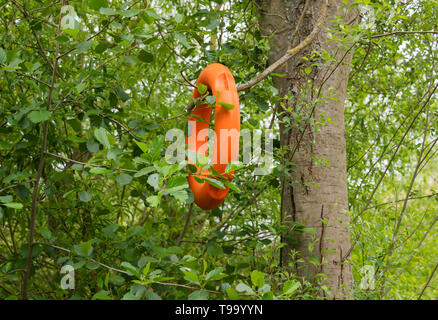 Orange lifebelt hanging in tree - Stock Image