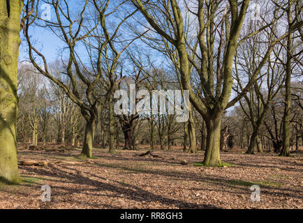 Richmond Park Landscape - Stock Image