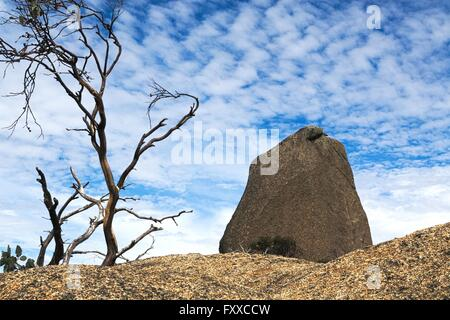 Large monolith rock and dead tree against blue, cloudy sky. - Stock Image