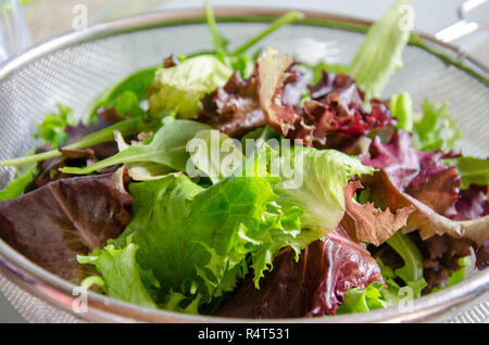 A mixed leaf salad in a cullender as part of preparation of a meal. - Stock Image