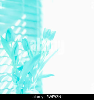 Spring tulips in bloom illustration in soft focus aqua turquoise blue background with white space blank copyspace for springtime, Easter, Mother's Day - Stock Image