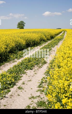Track, Summer Landscape, Wiltshire, UK. - Stock Image