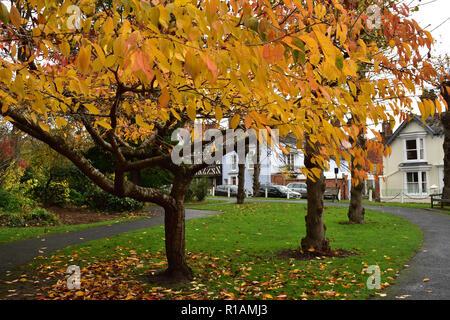 Autumn Colours - Stock Image