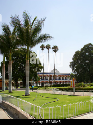 Cuban Royal Palms, Roystonia regia, Arecaceae Growing in the Municipal Palace Gardens, Santa Maria del Tule Oaxaca - Stock Image