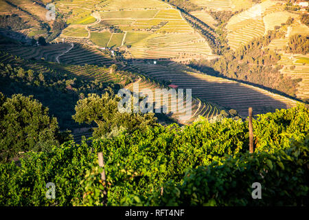 Douro Valley vineyards, Portugal, Europe - Stock Image