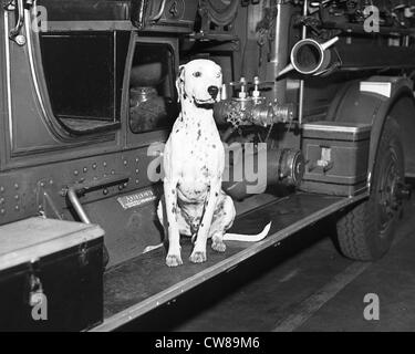 A Dalmatian sits on the running board of a fire truck at the Glen Cove Fire Dept in Glen Cove, Long Island, NY, - Stock Image