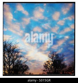 Sunset, trees and clouds. - Stock Image