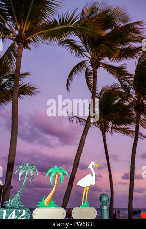 Hollywood Florida Hollywood Beach Boardwalk Atlantic Ocean palm tree beach dusk frond trunk street vendor address signs decorati - Stock Image