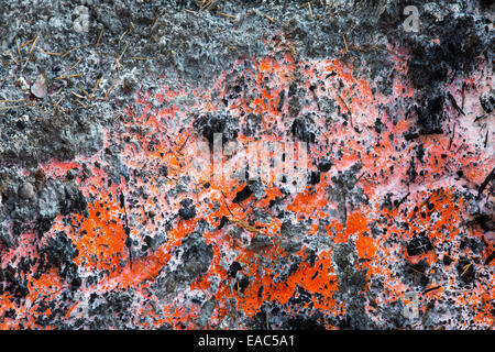 Orange colours left by a tree stump burning in the King Fire that burned 97,717 acres of the El Dorado National - Stock Image
