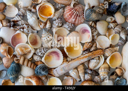 A mixed variety of sea shells. Background featuring a mixture of various seashells. - Stock Image
