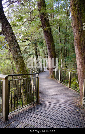Wooden walkway in Fjordland National Park, National Park - Stock Image