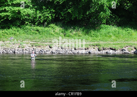 Fisherman fly fishing on the River Tummel downstream from the dam at Pitlochry, Perthshire - Stock Image