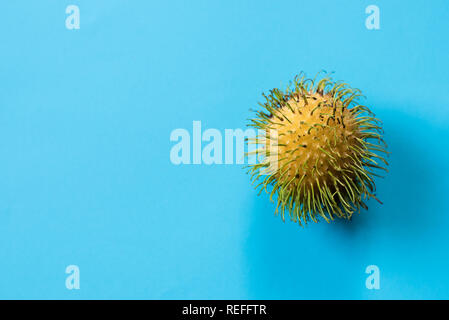 One yellow rambutan on blue background. Rambutan is a local fruit on malaysia, native to the Malay-Indonesian region, and other regions of tropical So - Stock Image
