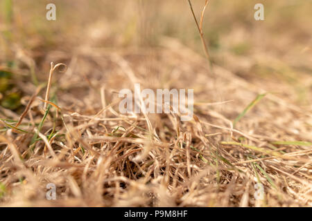 Poole, UK. 19th July 2018. The heatwave with very dry weather continues in the UK. Grass is turned brown with no rain. Credit: Thomas Faull/Alamy Live News - Stock Image