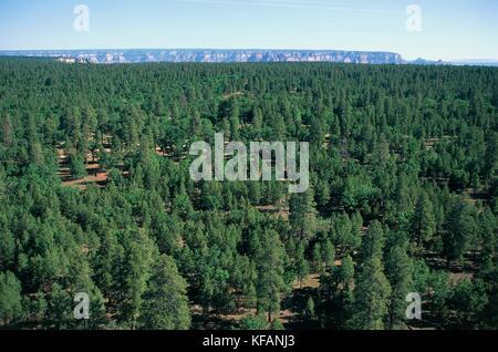 UNITED STATES OF AMERICA ARIZONA Coconino Plateau Colorado Plateau FOREST - Stock Image
