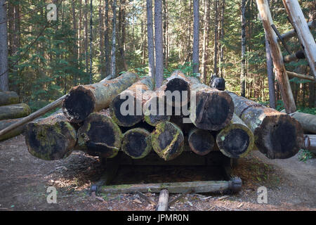 Pile stack of logs on a sled, shot end-on with forst behind. - Stock Image