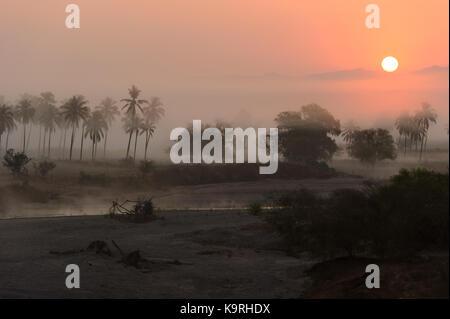 Jungle sunrise palm trees is a scenic landscape of the the morning jungle sunrise with the sun just peeking over - Stock Image
