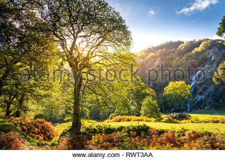 Autumn sun shines through the trees at Powerscourt Waterfall in County Wicklow - Stock Image