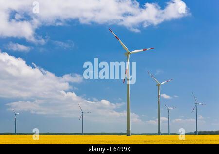 Wind turbines in rape field, NE Germany - Stock Image