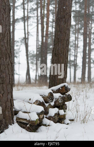 Trees On Snow Covered Field During Winter - Stock Image