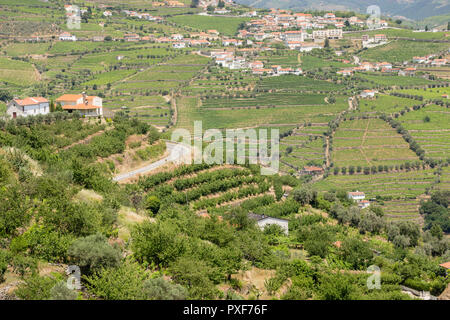 patterns of vines in vineyards in the Alto Douro Port Wine region of Portugal in Summer looking towards the area of Peso da Regua - Stock Image