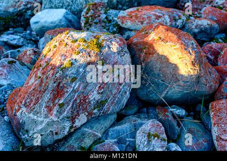 Rocks with algae - Stock Image