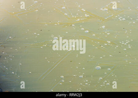 Small air bubbles frozen in cracked ice of a dew pond - Stock Image