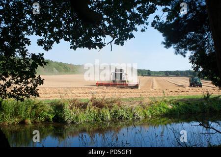 Wheat harvesting, Nottinghamshire, UK. - Stock Image