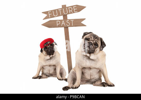 pug puppy dog and aged animal sitting next to signpost with text past and future, isolated on white background - Stock Image