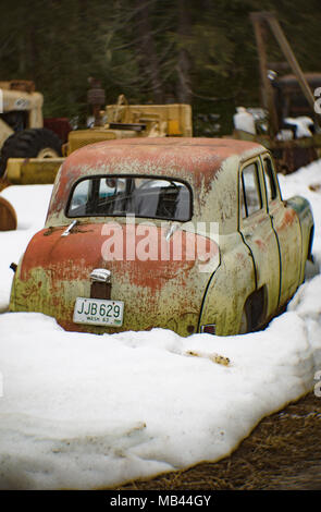 The back of a 1950 Hillman Minx 4-door hardtop sedan, in a wooded area, in Noxon, Montana.  This image was shot with an antique Petzval lens and will  - Stock Image