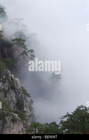 trees growing on ai-petri mountain on crimea covered in fog - Stock Image