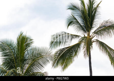 Palm trees - Stock Image