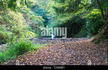 Lyd Hole Waterfall on the Habberley Brook near Earl's Hill, Shropshire, England. - Stock Image
