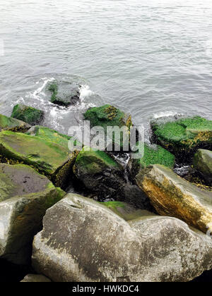 Mossy rocks at Barnegat Bay Lighthouse New Jersey - Stock Image