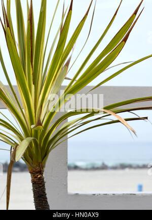 on the beach in Coronado California - Stock Image