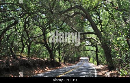 Overhanging Oak trees, Live Oak Canyon Road, O'Neil Regional Park, Orange County, CA  120714_30512 - Stock Image