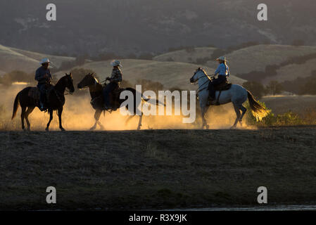 USA, California, Parkfield, V6 Ranch three riders, two men and one woman, on horses kicking up dust at dawn (MR) - Stock Image