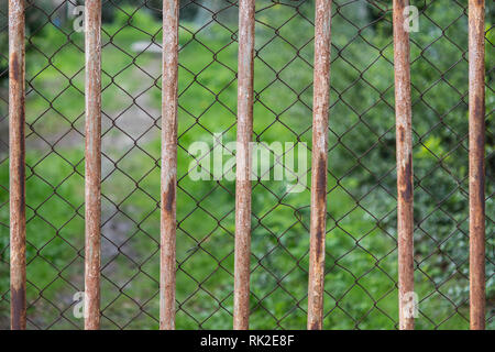Green vegetation behind a double metal fence. Close-up of metal grate and wire mesh. Old rusty netting and rods with greenery on a blurred background. - Stock Image