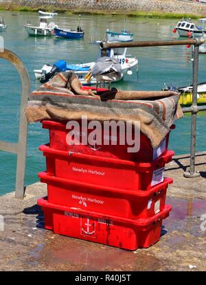 Seagull feeding on fishing bait crates in St Ives Harbour,Cornwall,England,UK - Stock Image