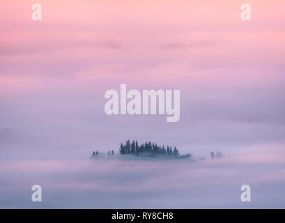 dreamy landscape background with trees surrounded by fog at sunrise - Stock Image