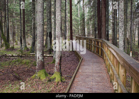 Beaver trail In Soomaa National Park , Estonia May 1, 2018 - Stock Image