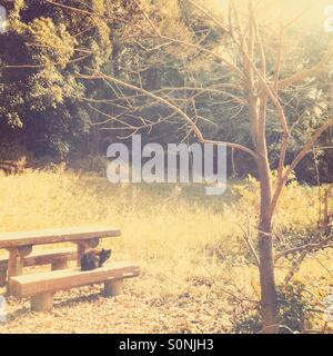 Black alley cat sitting on wooden bench at park in autumn. Warm vintage paper texture overlay. - Stock Image