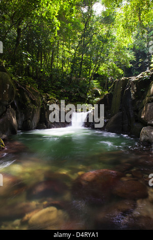 Chaudier Pool, Dominica - Stock Image
