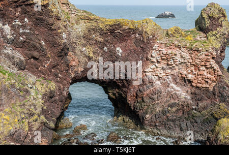 Dunbar Rock Arch, once possibly a part of the now all but disappeared Dunbar Castle East Lothian Scotland - Stock Image