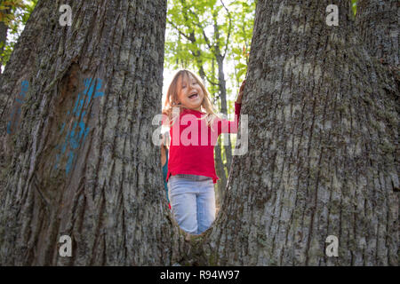 four years age blonde child with red shirt and blue jeans looking and laughing between trunks of chestnut trees in forest - Stock Image